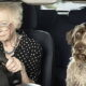 Пенсионеров массово лишат прав на управление транспортом